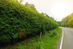 Arbustos en el camino Fotos de archivo