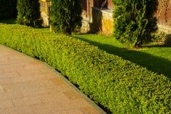 Arbustos en el paisaje de la casa foto de archivo