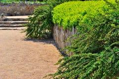 Arbustos en el parque del verano Imagen de archivo libre de regalías