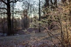 Arbustos en escarcha en el sol imagen de archivo libre de regalías