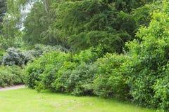 Arbustos en jardín del verano Imagen de archivo libre de regalías