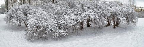 Arbustos en la nieve Foto de archivo libre de regalías