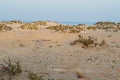 Arbustos en las playas prístinas Imagen de archivo libre de regalías