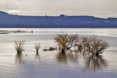 Arbustos en un lago foto de archivo libre de regalías