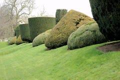 Arbustos esculpidos en jardín Foto de archivo