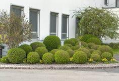 Arbustos esféricos en mún Brueckenau Fotografía de archivo libre de regalías