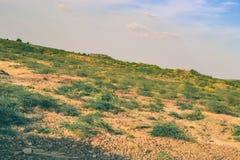 Arbustos espinosos verdes en una colina fotografía de archivo