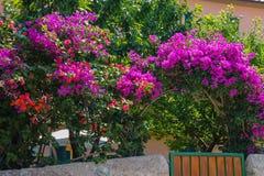 Arbustos florecientes hermosos cerca de la pequeña casa fotos de archivo