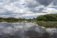 Arbustos florecientes y árboles muertos en las orillas del lago Naivasha Fotos de archivo libres de regalías