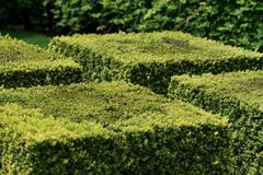 Arbustos formados cubo en jardín Perfeccione las plantas del corte Foto de archivo