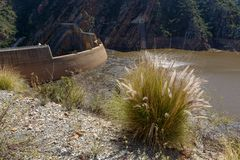 Arbustos gramíneos longos que crescem na represa foto de stock