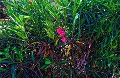 Arbustos grandes grandes con una pequeña flor rosada imagen de archivo