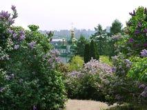 Arbustos lilás perto da estrada contra o contexto das abóbadas verdes da igreja foto de stock royalty free