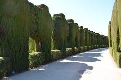 Arbustos Manicured Imágenes de archivo libres de regalías