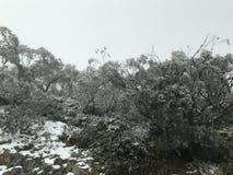 Arbustos muertos con las ramas nevosas fotografía de archivo libre de regalías