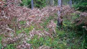 Arbustos murchos na floresta filme