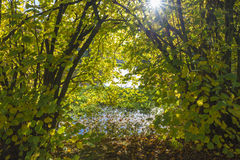 Arbustos no rio de Erft Fotos de Stock Royalty Free