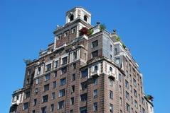 Arbustos no telhado do edifício Fotos de Stock Royalty Free