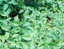 Arbustos pequenos Foto de Stock