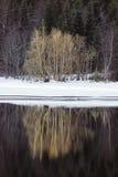 Arbustos que crecen en el río Foto de archivo