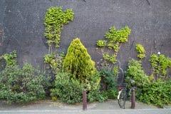 Arbustos que crecen en la pared en Amsterdam Imágenes de archivo libres de regalías