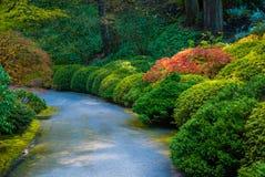 Arbustos redondos bonitos ao longo de um trajeto em um parque Foto de Stock Royalty Free