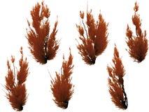 Arbustos rojos aislados en blanco stock de ilustración