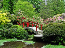 Arbustos rojos de la flor del puente del jardín japonés Fotos de archivo