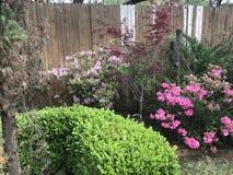 Arbustos rosados preciosos de la flor Imágenes de archivo libres de regalías
