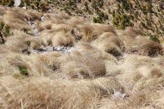 Arbustos secados en la montaña imagenes de archivo