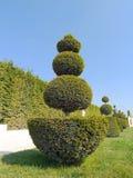 Arbustos verdes fotografia de stock
