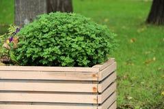 Arbustos verdes Fotos de archivo libres de regalías