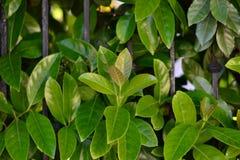 Arbustos verdes Imagem de Stock