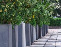Arbustos verdes ao longo do cais fotografia de stock