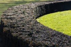 Arbustos verdes curvados na mansão dos disjuntores em Newport Rhode - ilha imagem de stock