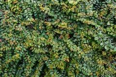 Arbustos verdes en día del parque Fotografía de archivo