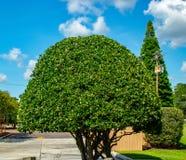 Arbustos verdes redondos de los árboles del scape de la tierra Fotos de archivo libres de regalías
