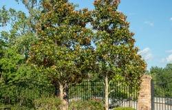 Arbustos verdes redondos de los árboles del scape de la tierra Fotos de archivo