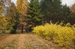 arbustos y bosque mezclado fotografía de archivo