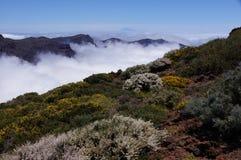 Arbustos y flores salvajes, isla de Tenerife y cumbre del Teide fotografía de archivo libre de regalías