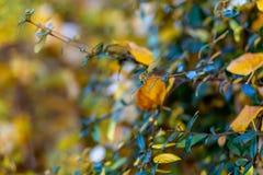 Arbustos y hojas amarillas Oto?o Fondo borroso hermoso de la naturaleza Profundidad del campo baja Imagen entonada Copie el espac imagen de archivo libre de regalías