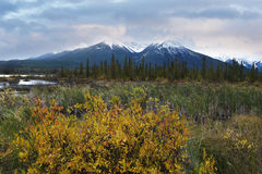 Arbustos y nieve fresca cerca del lago bermellón Fotografía de archivo libre de regalías