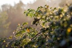 Arbustos y sol foto de archivo libre de regalías