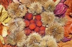 Arbutus από μια ομάδα καρυδιών και ξηρών φύλλων Στοκ εικόνα με δικαίωμα ελεύθερης χρήσης