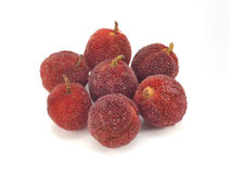 Arbutus Royalty Free Stock Photos