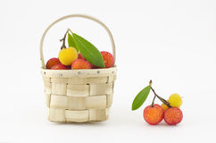 Arbutus Stock Photography