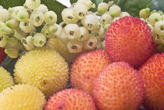 Arbutus flowers and fruits. Closeup from some arbutus fruits and flowers Royalty Free Stock Images