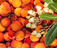 Arbutus flowers and leaves. Royalty Free Stock Photos