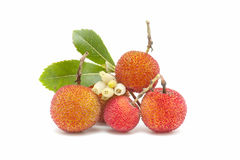 Arbutus fruit. Natural arbutus isolated on white background Stock Photography