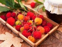 Arbutus-fruit. Arbutus fruit in a basket Royalty Free Stock Photography